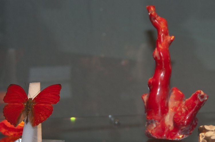 munich show 2012 butterflies and stones exhibition