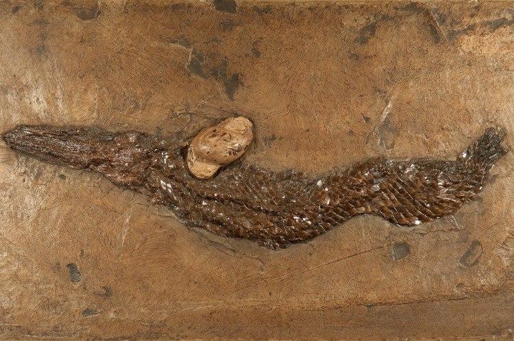 fossil on acryl